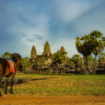 《シェムリアップ》一人旅おすすめのゲストハウスまとめ。カンボジアでは格安ドミトリーを利用しよう。