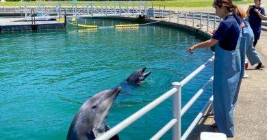 島暮らし移住計画ブログ#07 長崎の壱岐島でワーケーション体験!エメラルドグリーンの綺麗な海の近くでリモート仕事